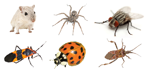 Common pests: mice, spider, fly, boxelder bug, asian lady beetle, pine seed bug