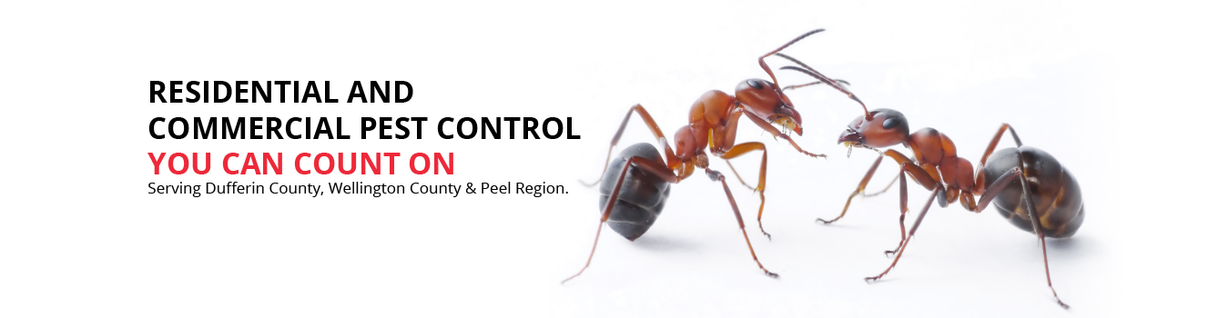 RESIDENTIAL AND COMMERCIAL PEST CONTROL YOU CAN COUNT ON. Serving Dufferin County, Wellington County & Peel Region.